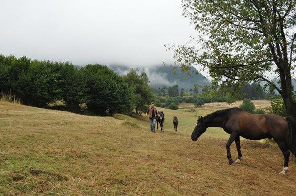Еднодневни преходи - Конна езда - Родопи